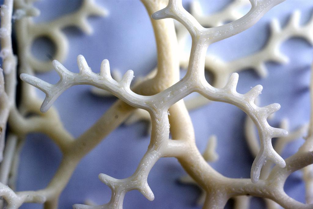 nervoussystem01
