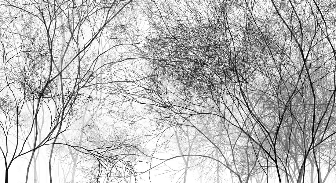 trees06