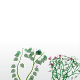 flowerium02
