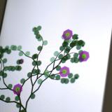 flowerium10x