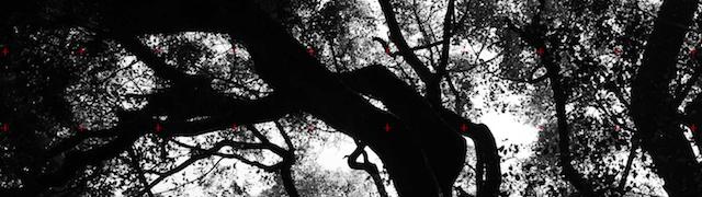 forest_symphony_08 copy