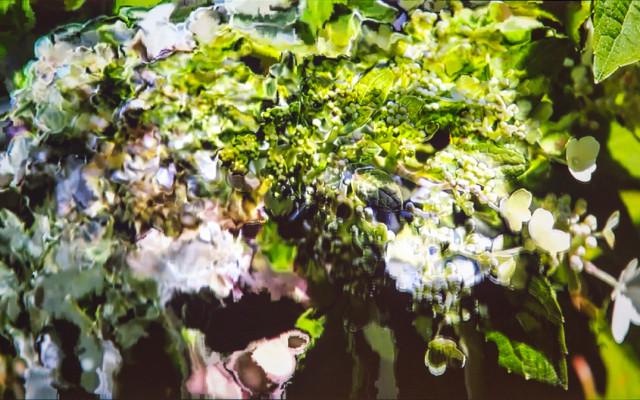 Adrienne Crossman – Plant Series 1