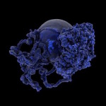 Hybrid Forms: New Growth / Exploration of morphogenesis by Andy Lomas