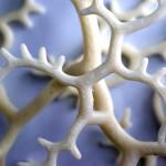 Nervous System [Profile, Cinder, Processing]