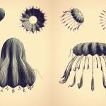Cindermedusae [Cinder]
