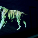 Golden Tiger – Moving projection on the streets of Paris