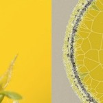 Stem by Diana Lange – Building stems from colour with Processing