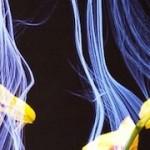 Botanicus Interacticus – Designing interactive plants at Disney Research