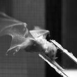 An efficient nectar mop