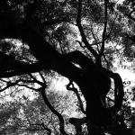 Art ― Environment ― Life: Ryuichi Sakamoto at YCAM