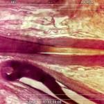 Historical.Pathologies // Future.Morphologies